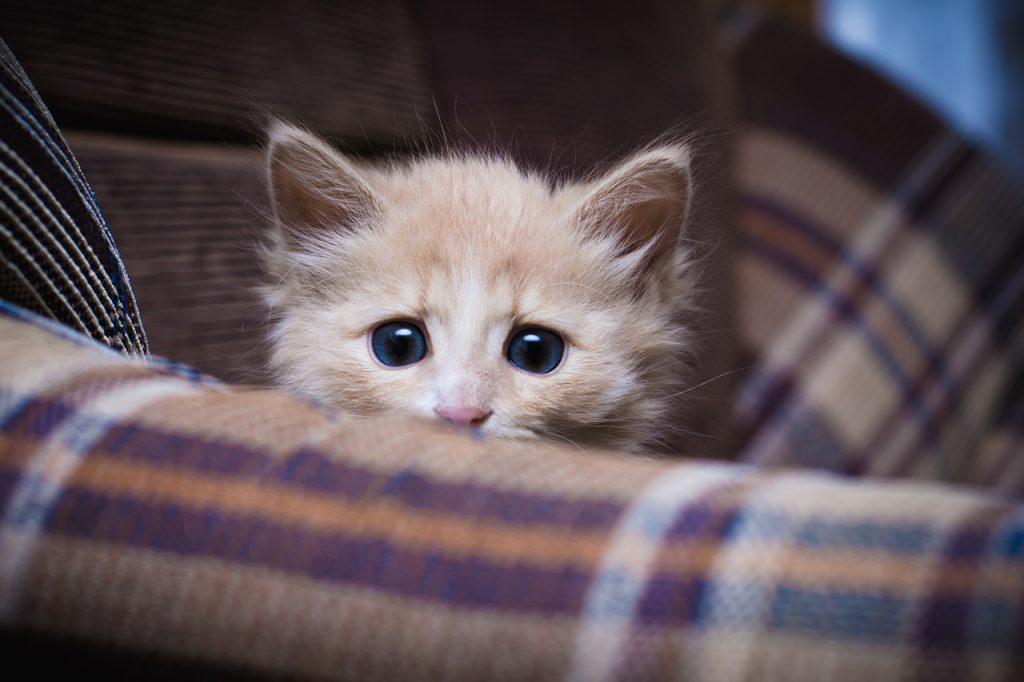 security-week-36-kitten