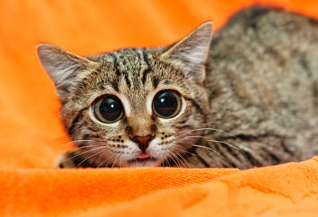 security-week-40-kitten