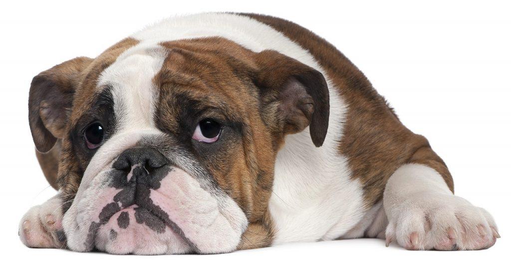 security-week-42-dog