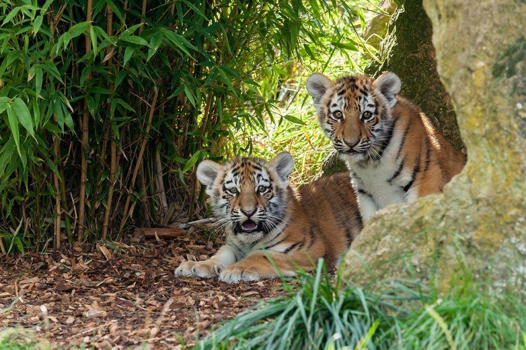 Большие данные помогают бороться с браконьерами