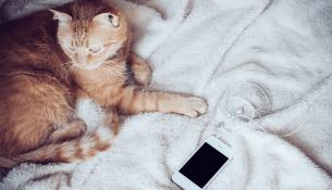 Digital Amnesia: 24 часа без смартфона – история одной авантюры