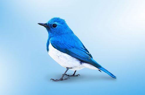 Настраиваем безопасность и приватность в Twitter