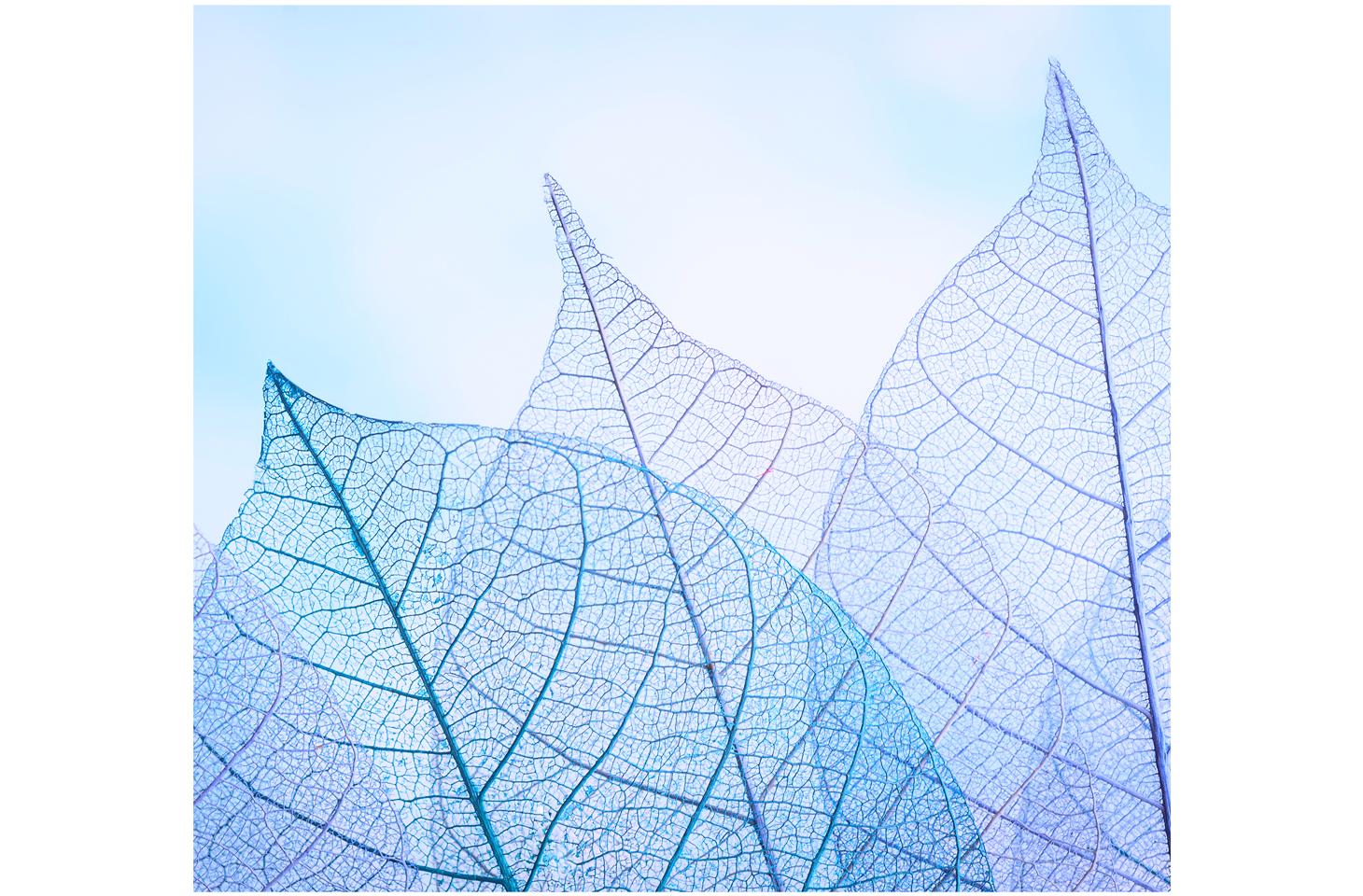 Первый отчет «Лаборатории Касперского» о прозрачности
