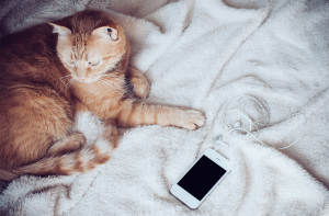 My risky gamble: 24 hours without smartphone