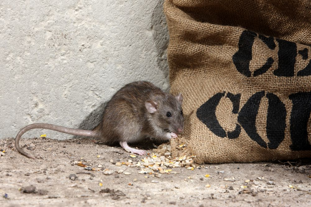 A layman's dictionary: RAT | Kaspersky official blog