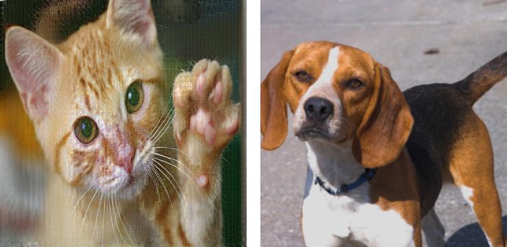 De acordo com o algoritmo NeuralHash da Apple, essas duas fotos são correspondentes