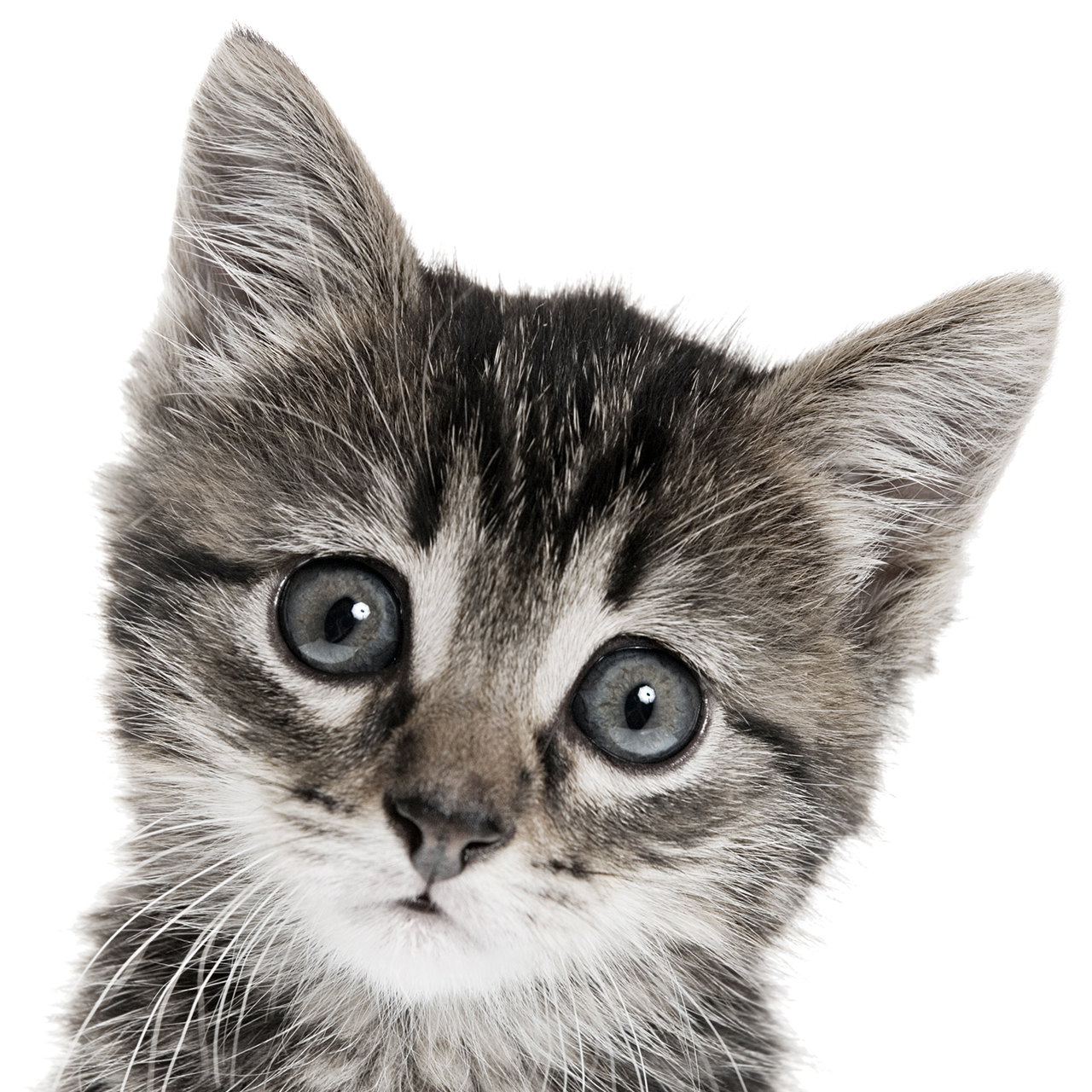 security-week-34-kitten